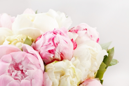 Rich bunch of peonies Stock Photo - 14578757