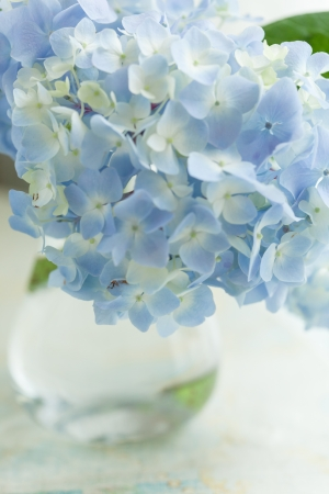 blue flower in vase photo