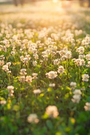 june: White clover