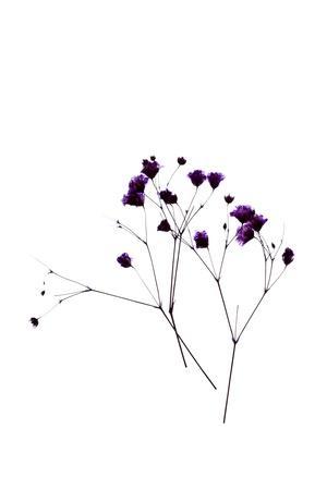flores secas: flor en el fondo blanco Foto de archivo