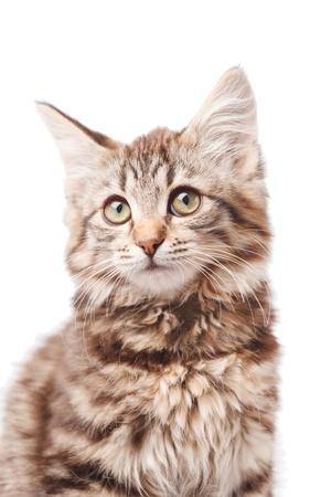petit chaton Banque d'images - 15328829
