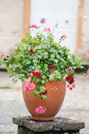 planter: geranium pot