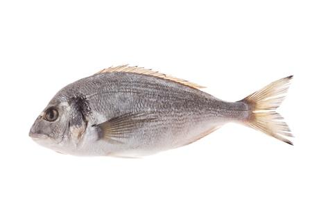 gilthead: Dorado fish isolated on white background