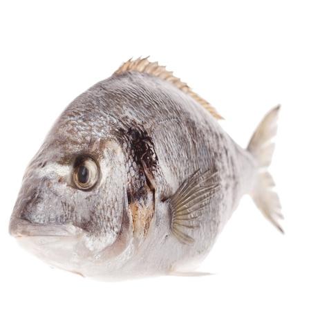 daurade: Dorado fish isolated on white background