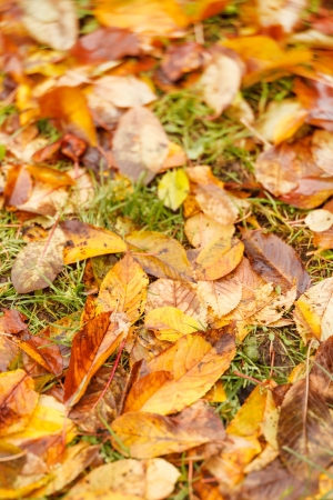 autumn leaves on ground for background Stock Photo - 17086457