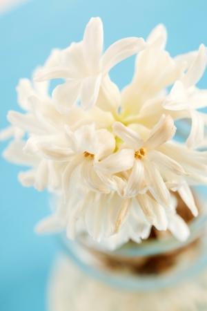 flower vase: hyacinth