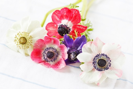 Anemone flowers  photo
