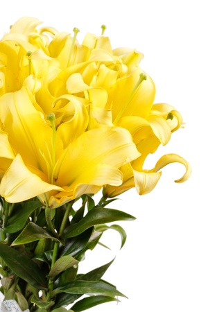 Beautiful lilies Stock Photo - 18429384