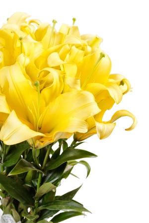 Beautiful lilies Stock Photo - 18429384