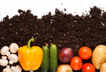 yellow earth: vegetables on the soil