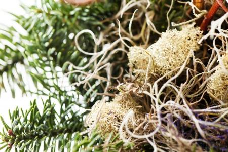 Christmas decoration Stock Photo - 18565689