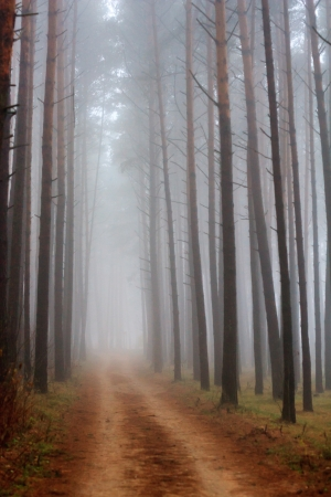 Trees in fog  photo