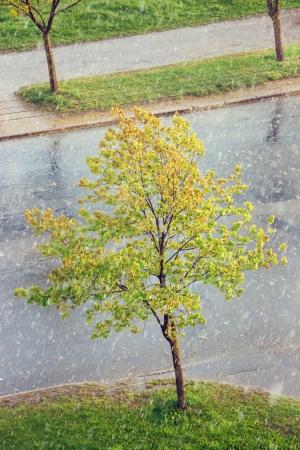 soppy: rain in the city
