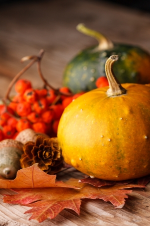 country life: Harvested pumpkins with fall leaves  Stock Photo