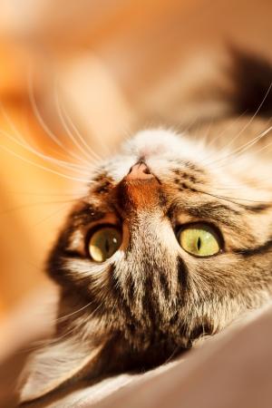 relaxes: gato se relaja y sue�os