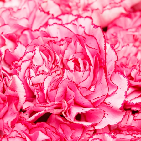 carnation bouquet photo