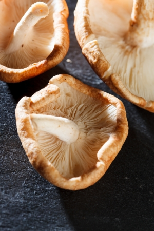 Shiitake Mushrooms photo