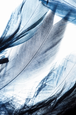 feather boa: Color feathers