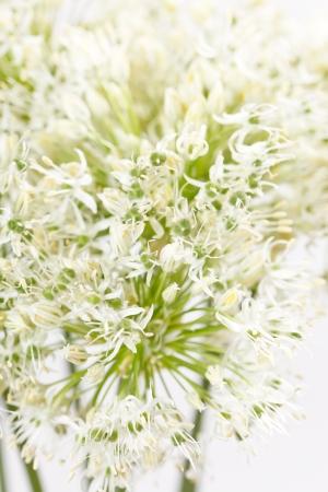herbaceous border: beautiful flowers