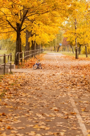 autumn park photo