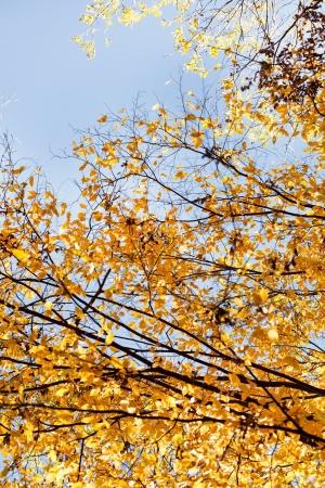 distort: autumn trees Stock Photo