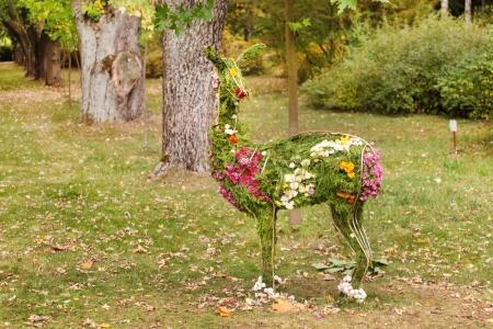 the lama: flowers lama Stock Photo