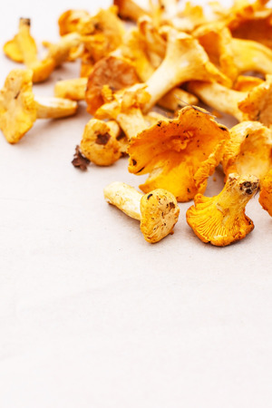 chanterelle mushrooms Stock Photo - 23670892