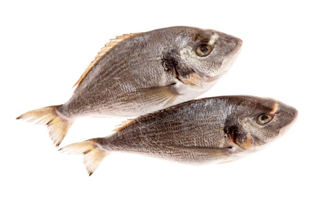 daurade: Dorado fishes isolated on white