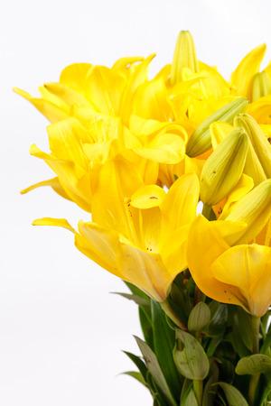 lemony: Beautiful lilies Stock Photo