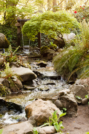 water spring: water spring in forest Stock Photo