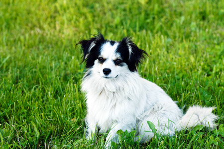 platy: nice dog on the field Stock Photo