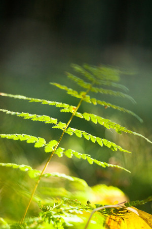 micro climate: fern in the forest