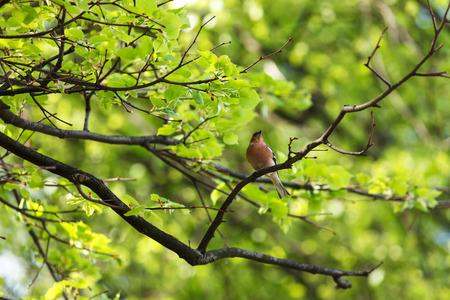 vogelspuren: schöner Park