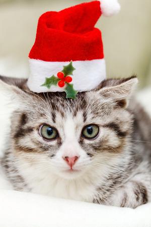 Christmas kitten photo