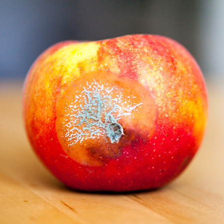rancid: mold apple