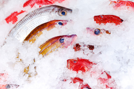 sparus: fish on ice Stock Photo