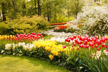 Frühlingsgarten Standard-Bild
