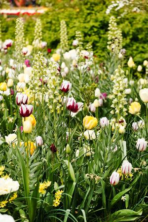 holland landscape: sping garden