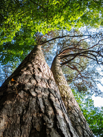 twiggy: nice tree Stock Photo