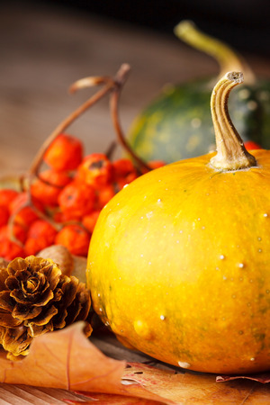 ash gourd: Harvested pumpkins with fall leaves