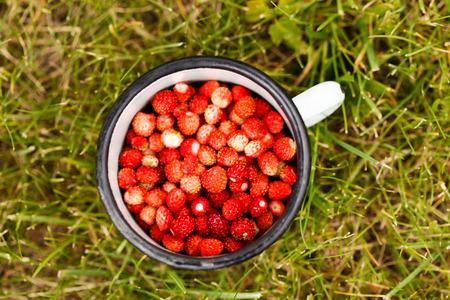 plato del buen comer: fresas salvajes
