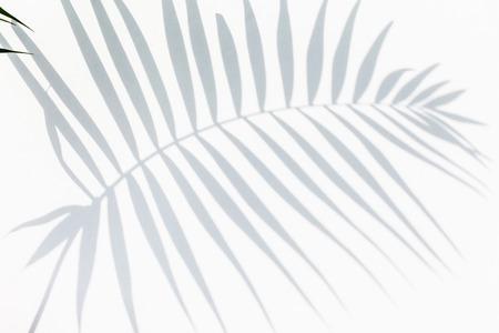 shadow of palm leaves 免版税图像