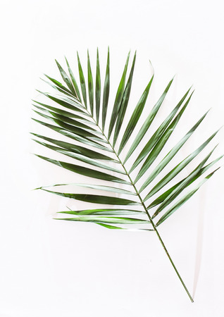 areca: areca palm leaves