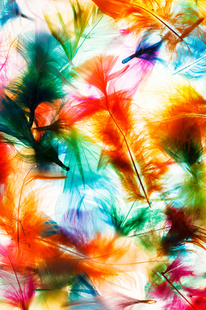 waft: Colorful feathers