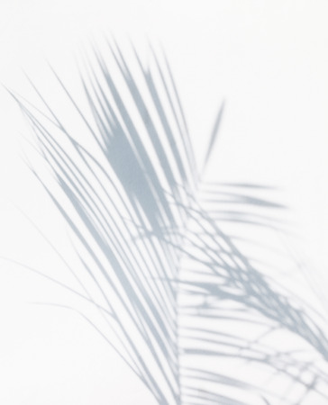 branches and leaves: shadow of palm leaves Stock Photo