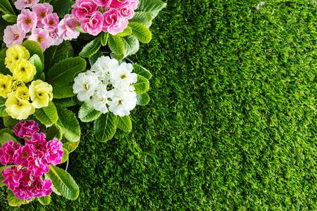 flower gardens: flores de primavera Foto de archivo