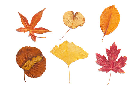 autumn colors: autumn leaves