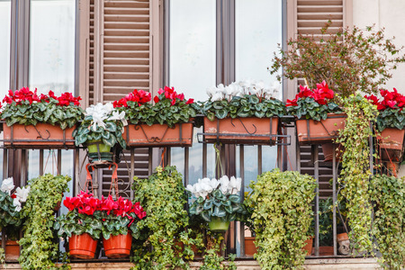 flowers on the balcony