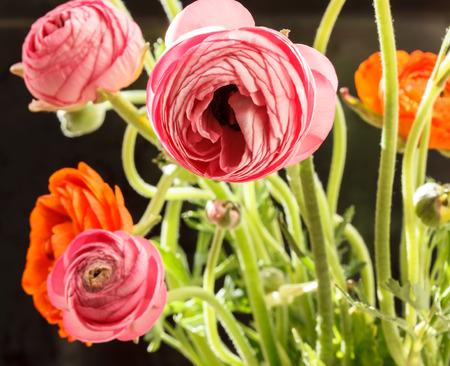 buttercup persian: Colorful persiano ranuncolo fiori ranuncoli Archivio Fotografico