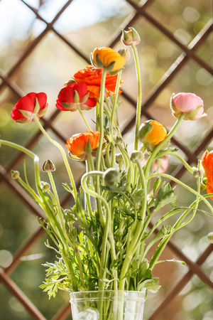 buttercup: Colorful persian buttercup flowers ranunculus Stock Photo